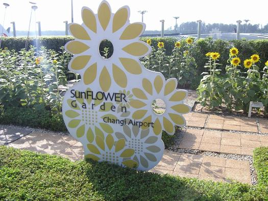 Sunflower garden, Changi Airport, Singapore. 2006