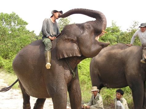 Elephant kisses. Elephant flying squad, Riau, Sumatra, Indonesia. 2006