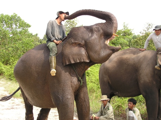 Elephant kisses. Elephant flying squad, Riau, Sumatra, Indonesia. 2006