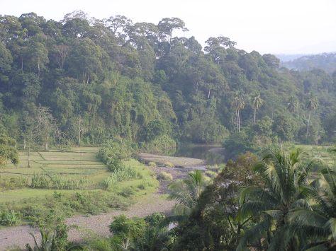 Forest in Sumatra, Indonesia. 2006.