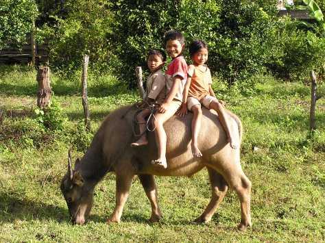 Cambodian children on water buffalo. Near Kratie, Cambodia. 2006.