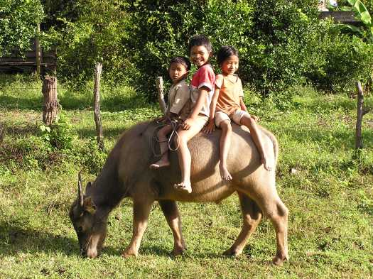 Cambodian children on water buffalo. Near Kratie, Cambodia. 2006.