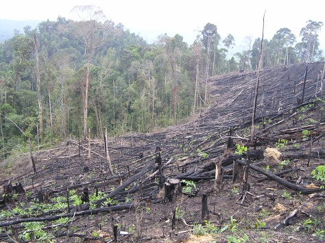 Slash and burn, Riau, Sumatra, Indonesia. 2006