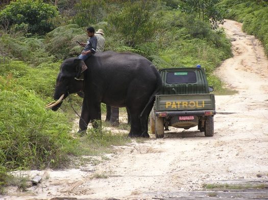 Elephant flying squad and ranger patrol team, Tesso Nilo National Park, Riau, Sumatra, Indonesia. 2006