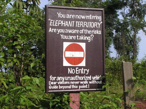 Elephant nature reserve, Laos. 2006.