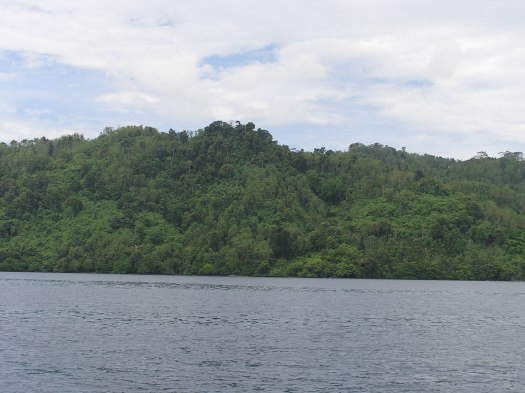 Dense forest, Bukit Barisan Selatan National Park, Sumatra, Indonesia. 2005