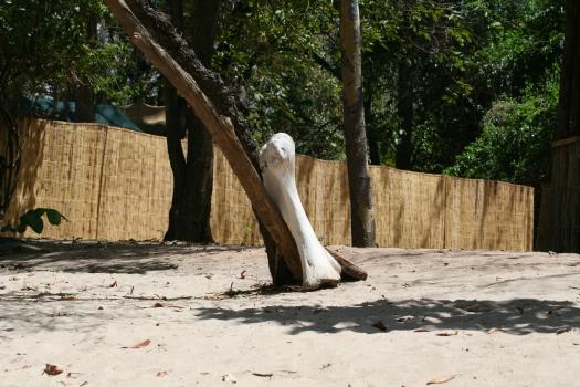 Elephant bone, Selous Game Reserve, Tanzania. 2007