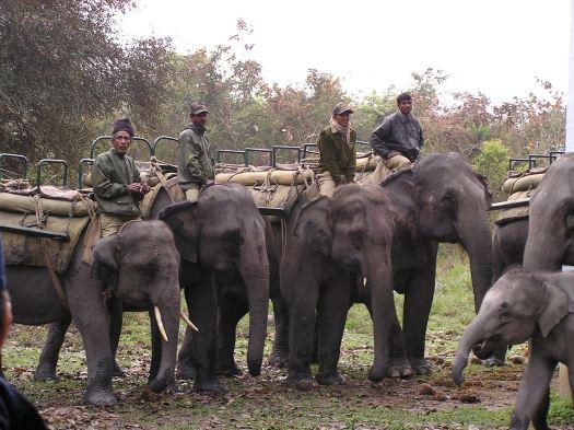 Tourism elephants, Kaziranga National Park, India. 2007