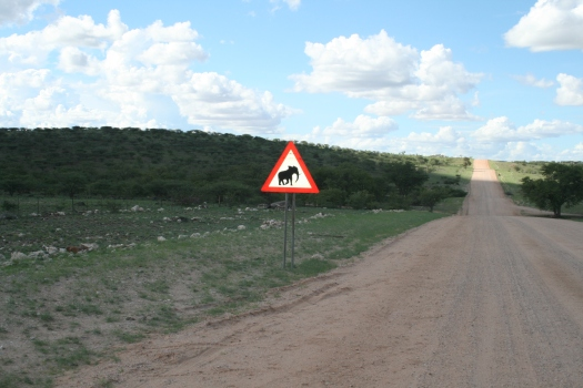 Elephant crossing. Namibia. 2008.
