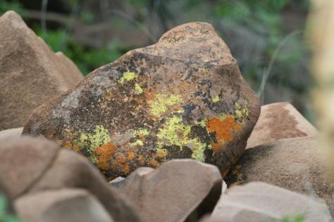 Lichens on rock. Grootberg Plateau, Namibia 2008.