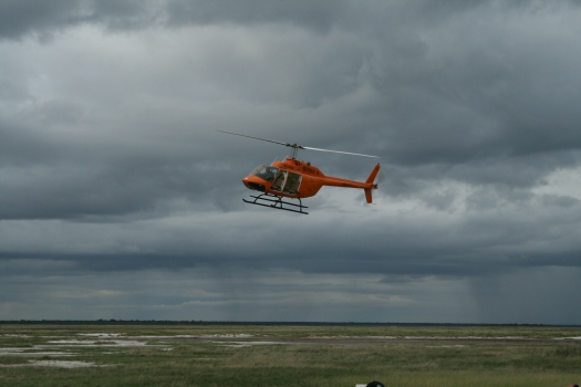 Helicopter on rhino capture operation, Etosha National Park, Namibia
