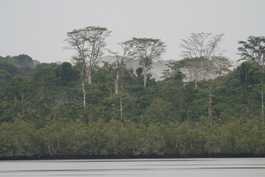 Forest of Equatorial Guinea seen from Campo River.
