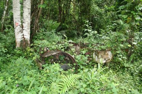 Abandoned Dodge WC-51 truck in an overgrown rubber plantation. Dipikar Island, Cameroon.