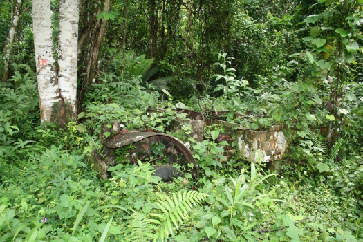 Abandoned Dodge WC-51 truck in an overgrown rubber plantation. Dipikar Island, Cameroon.