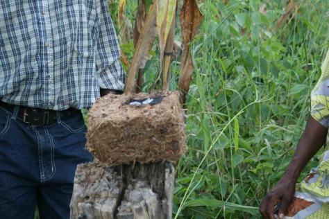 Smoldering chili pepper and elephant dung brick used to dissuade elephants from raiding crops. Mpiga Miti, Tanzania.