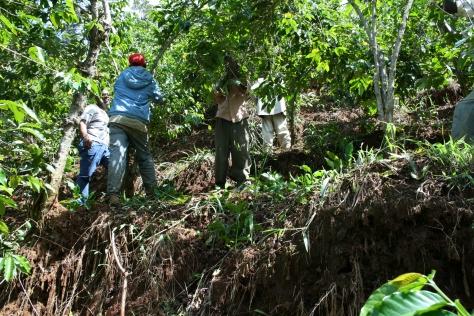 Coffee farming on steep terraces, Chogoria, Kenya