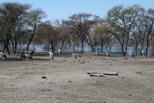 Namibia 024